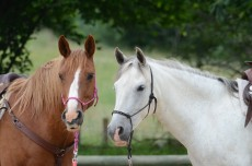 chevaux-equita