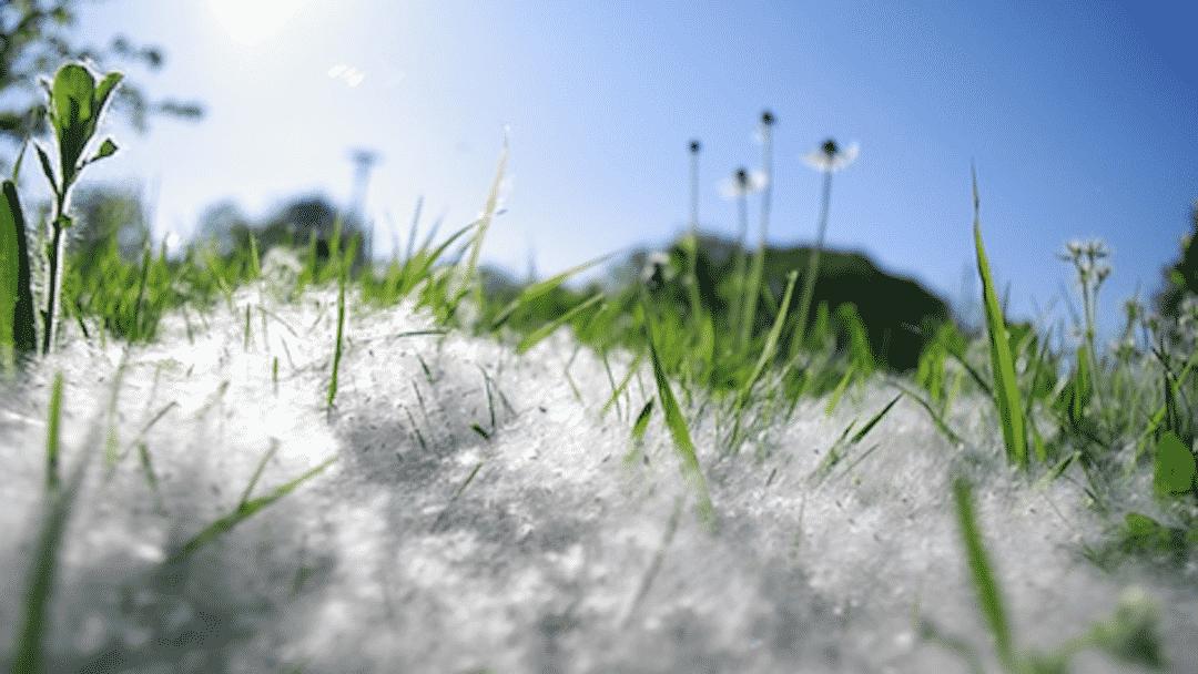 Les allergies arrivent en force en ce début de printemps