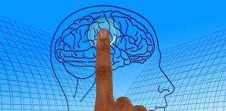 Les mystères du cerveau bientôt décryptés