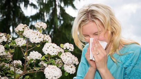 Les allergies au pollen sont aggravées cet été par un risque de pollution dans les grandes villes
