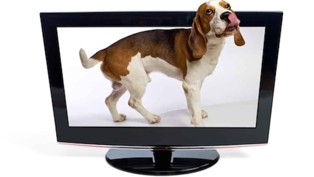 Merial va lancer une plateforme interactive pour les propriétaires d'animaux de compagnie