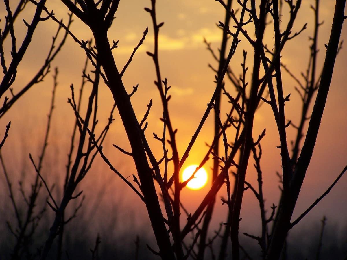 L'hiver tarde, et avec lui ses traditionnelles épidémies, telle la grippe ou la gastroentérite.