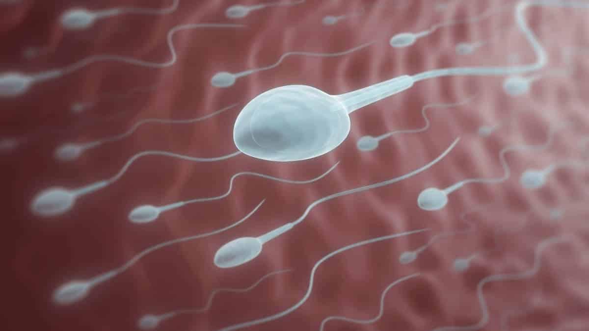 Les spermatozoïdes, une denrée trop rare chez les donneurs