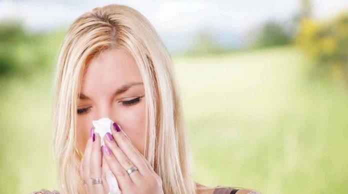 Les allergiques à l'ambroisie vont vivre des jours difficiles...