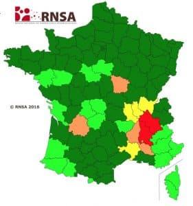 Les pollens d'ambroisie prolifèrent en Rhône-Alpes Auvergne