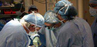 Du prélèvement à la transplantation, les équipes chirurgicales ont un délai très court pour agir.©DR