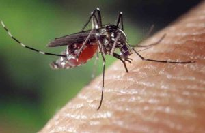 Auvergne-Rhône-Alpes figure parmi les régions le plus exposées au moustique tigre ©DR