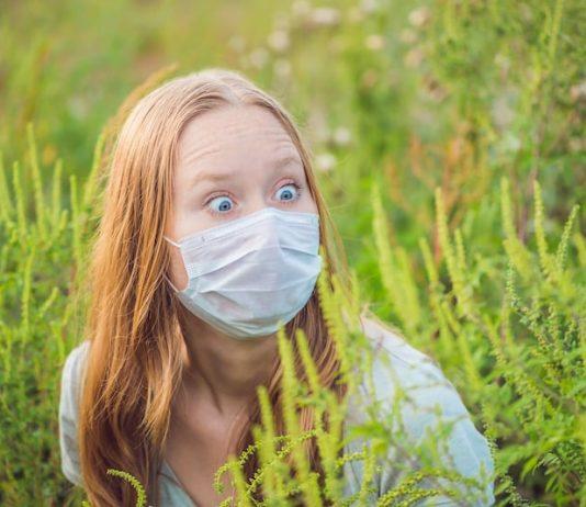Les effets de l'ambroisie sont particulièrement redoutables.