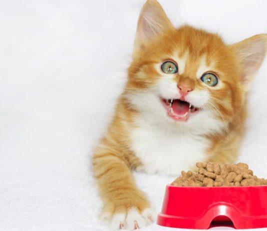 nourrir chat apprendre lyon ra sante