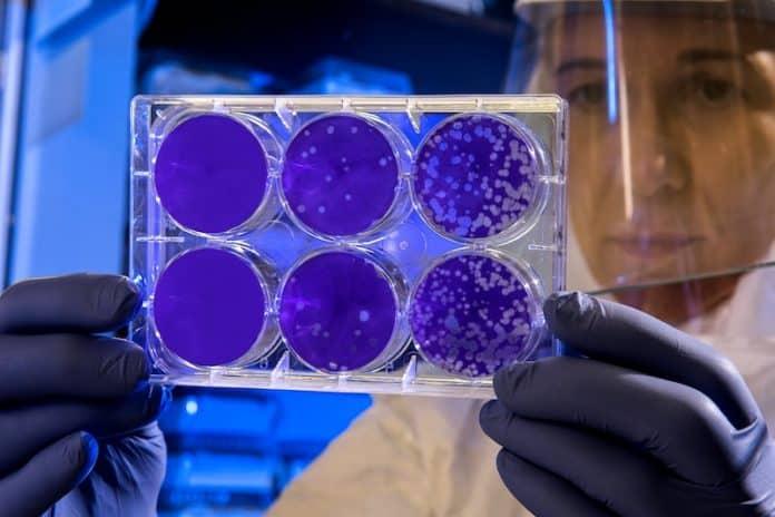 vaccin délai virus covid 19 coronavirus