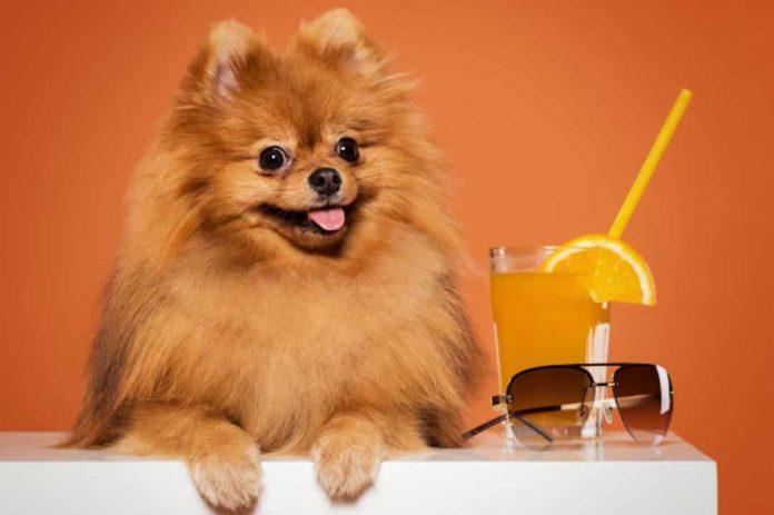 chien lunette de soleil orange boisson