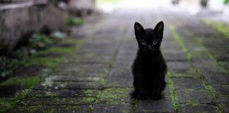 chaton noir seul qui semble perdu démarches adoption
