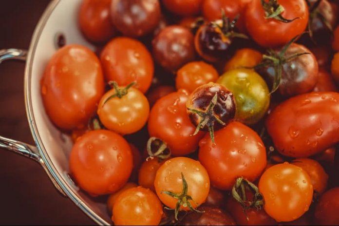 tomates bio local