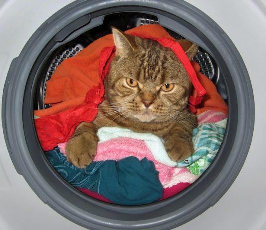 Les dangers domestiques sont nombreux pour le chat.