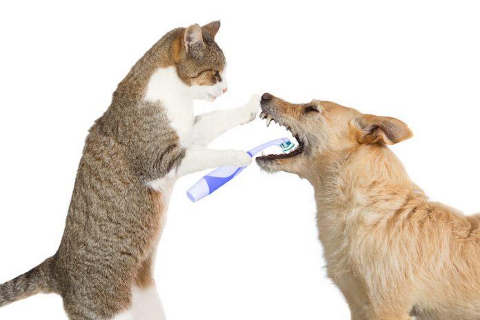 La santé dentaire des chiens et des chats, un sujet essentiel.