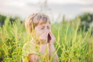 allergies ambroisie_Ra Sante