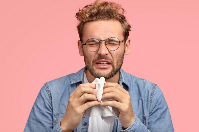 allergie pollen ambroisie